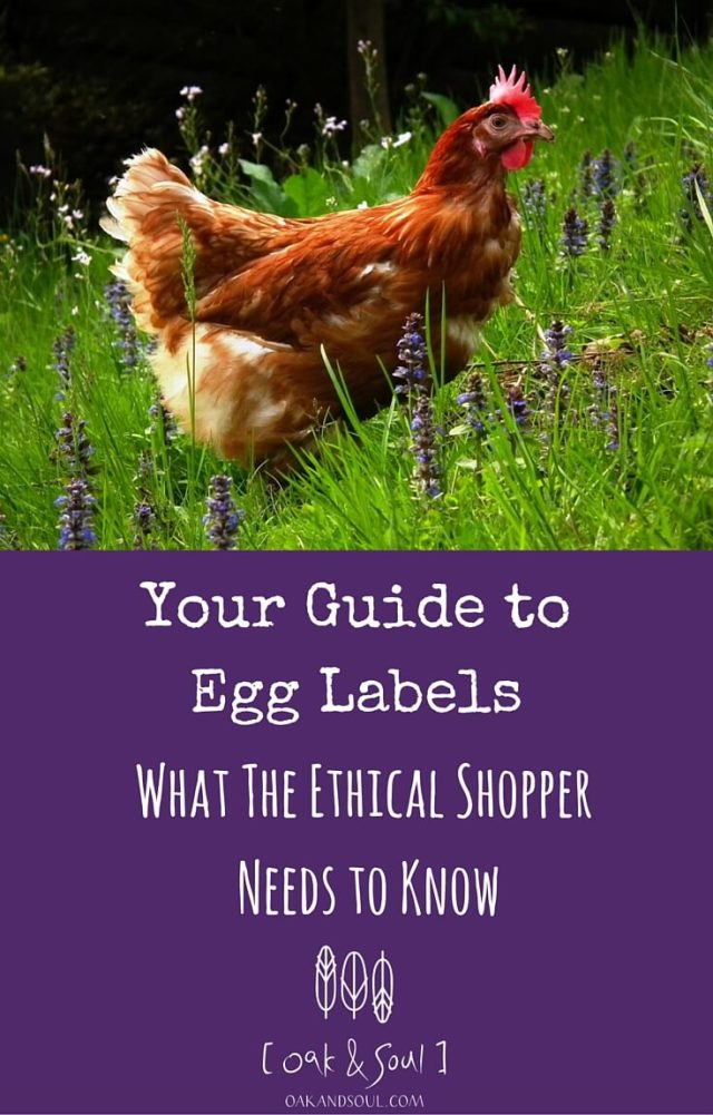 Your Guide to Egg Labels